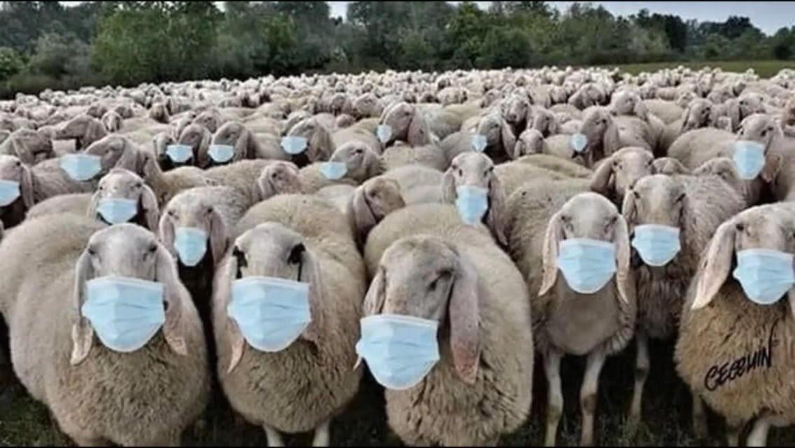 sheeple-masks